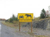 beware-of-giant-moose-new-brunswick-canada