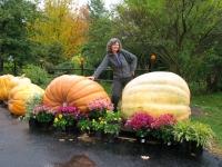 giant-pumpkins-nova-sotia-canaea