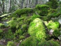 mossy-forest-salt-spring-island-bc
