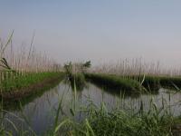 floating-gardens-inle-lake-myanmar