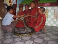 young-monks-with-python