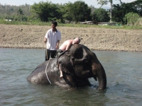 elephant-love-pai-thailand