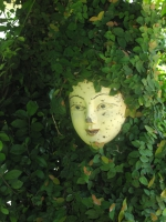 face_in_bush