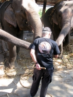 feeding-elephants-pai-thailand