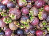 mangosteins-thailand