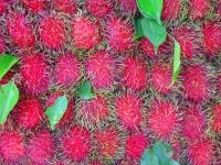rambutan-fruit-thailand