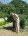 topiary_elephant